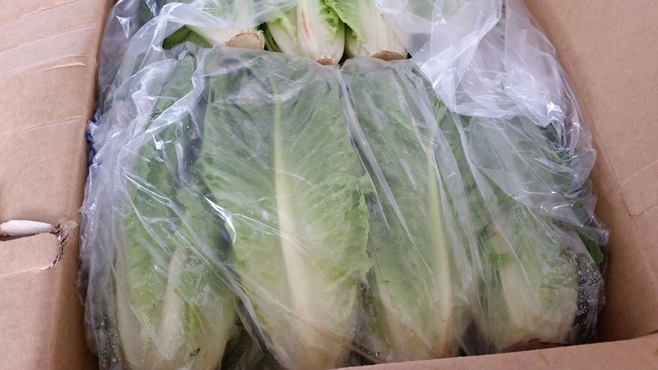 Romain Lettuce in bags