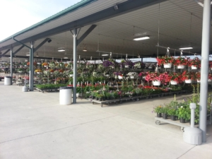 Hanging Baskets at the Auction