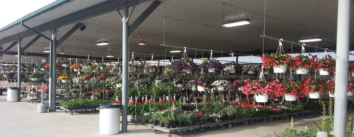 banner image of hanging baskets at the auction
