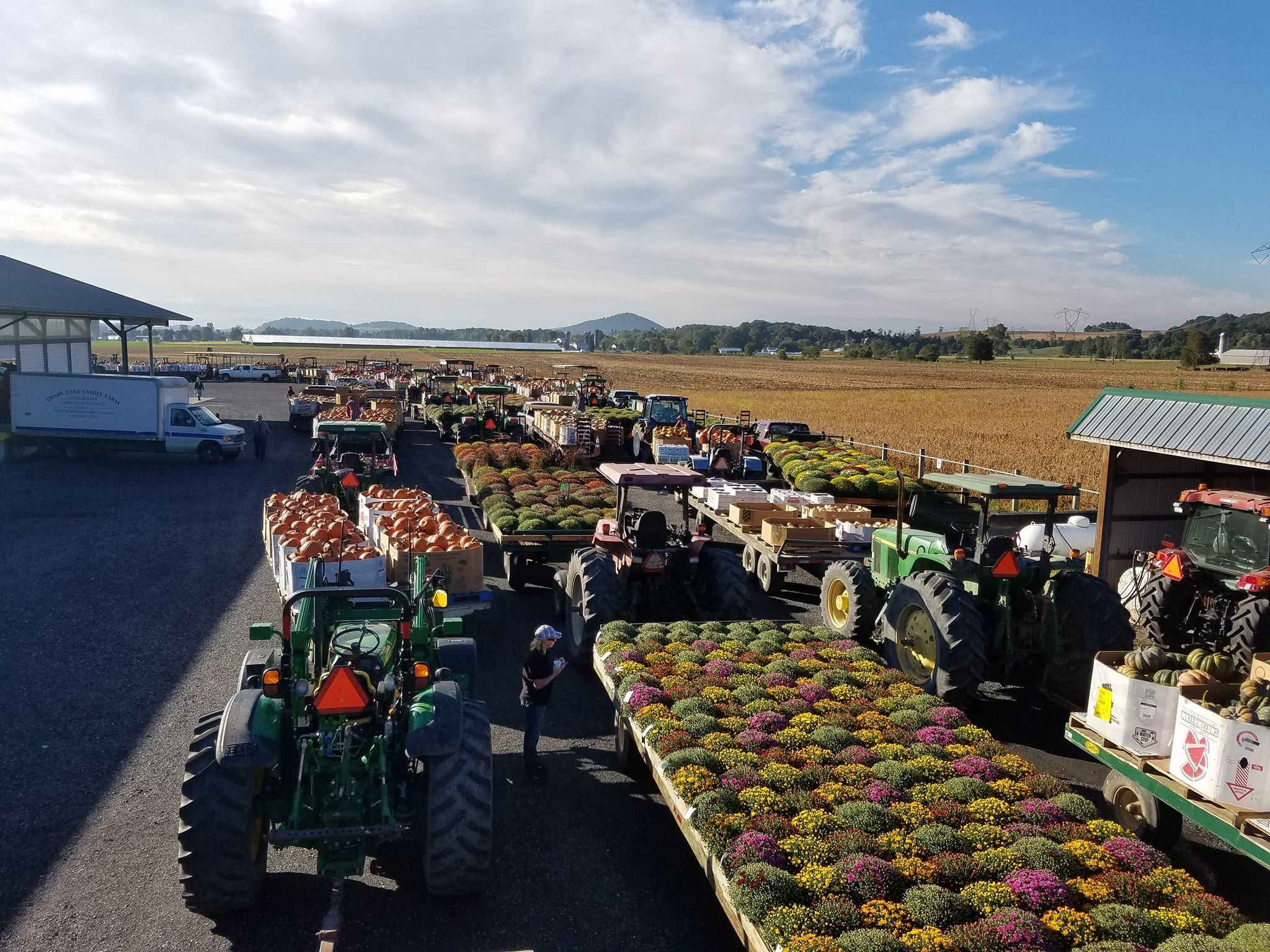 Trailers of merchandise at the produce auction